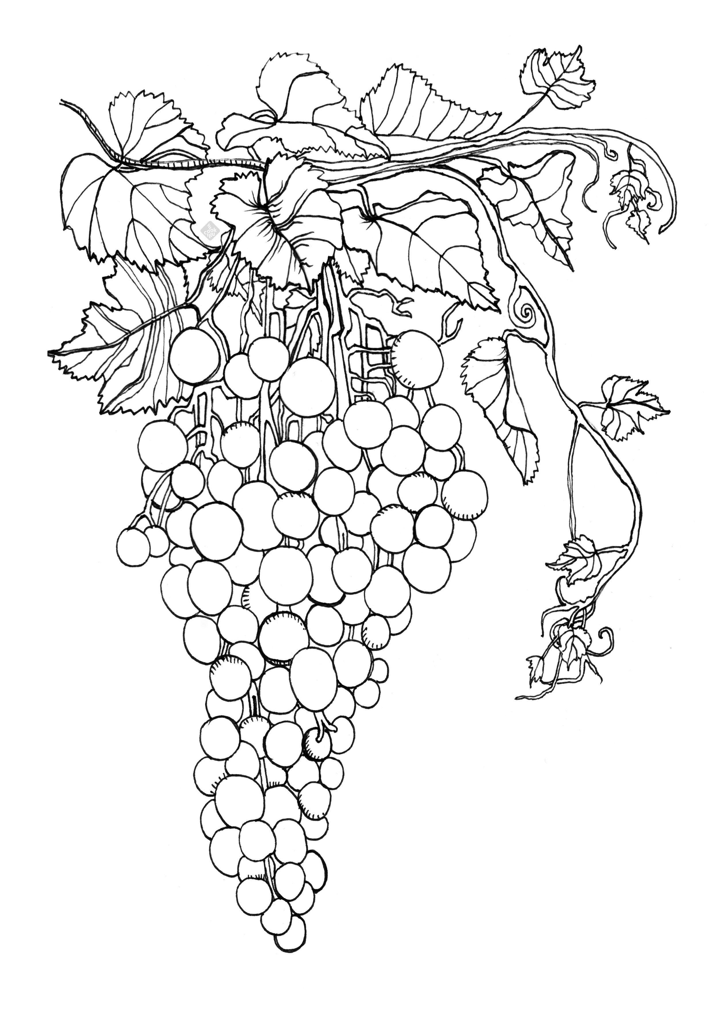 Grapes — Cookillu